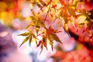 Herbstcontainerwartung